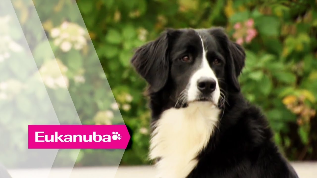 Special Breed Of Dog Helps Autistic Children Part 1