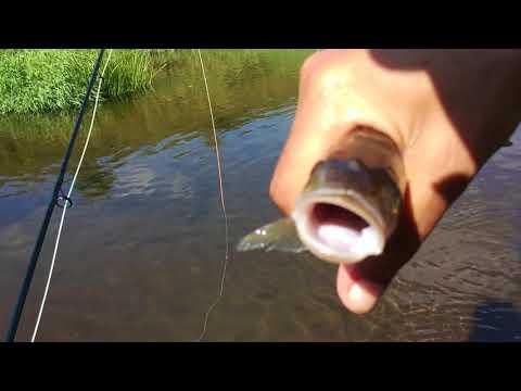 Рыбалка в районе Звенигорода