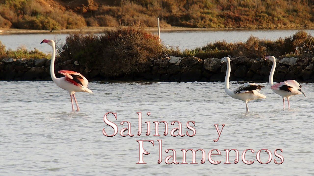 Salinas y Flamencos - Viviendo en un paraiso - Producciones Montana