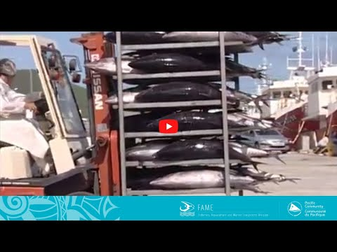 COASTAL FISHERIES TRAINING | 2.4 - On Board Tuna Loining And Freezing