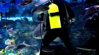 부산아쿠아리움 상어피딩쇼(Shark feeding sh…