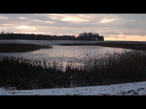 1 hour/WINTER/ Nature Sounds/ Water sound/ Birdsong/ Relax Meditation Yoga