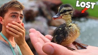 Rescuing Baby Abandoned Duck... Viewer Discretion Advised