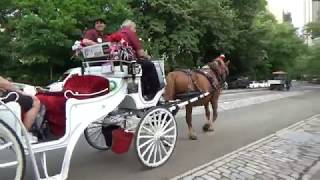 Are Carriage Rides Cruel To Horses?