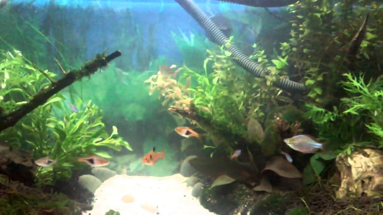 Aquascaping Freshwater Aquarium : My Planted Freshwater aquarium-Aquascaping - YouTube