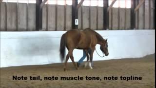 Eagle ProSix Treating Tendon Injury - EPM Rehabilitation