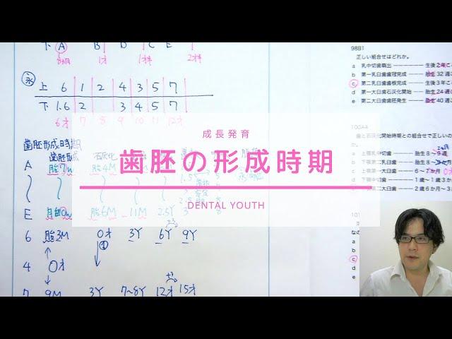 歯胚の形成時期【歯科医師国家試験】
