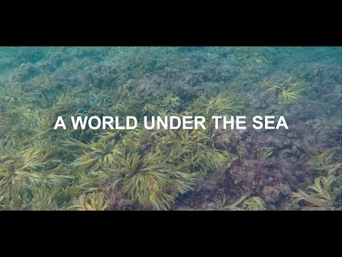 A WORLD UNDER THE SEA
