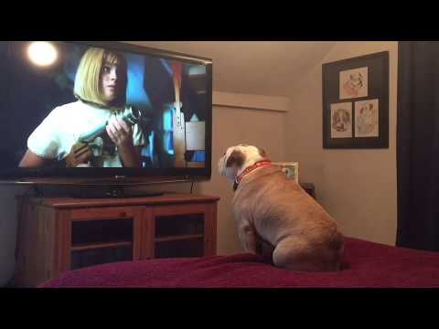 Khaleesi the Bulldog Reacts to Annabelle Prequel