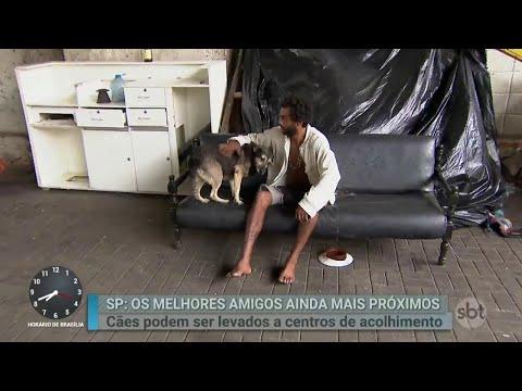 Abrigos para moradores de rua de SP também vão acolher os cães | Primeiro Impacto (17/04/18)