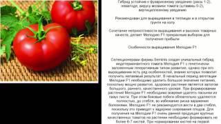 Новый революционный гибрид томата, который ждала Россия(Новый революционный гибрид томата, который ждала Россия Самый ранний из индетерминантных томатов известны..., 2016-03-23T08:05:25.000Z)