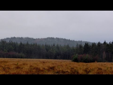 Cropton Forest, North York Moors - 2 January 2016