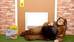 Pet Botanics Dog Treats | Chewy