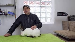Шесть самых важных ошибок начинающих кролиководов