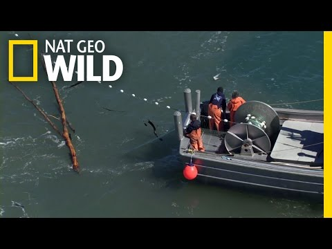 Net Nightmares | Alaska Fish Wars