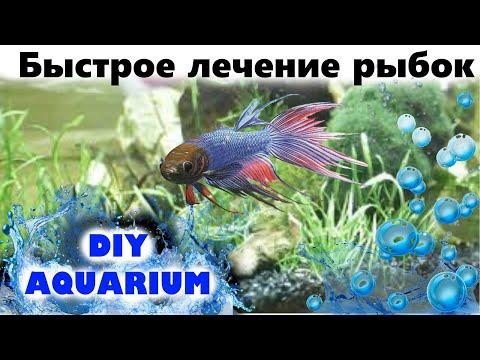 Лекарство для рыб от всех болезней (практически)