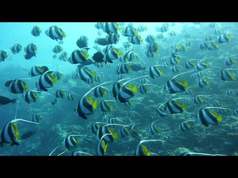 Diving Maldives (Faafu Atoll) Sea Wildlife 3