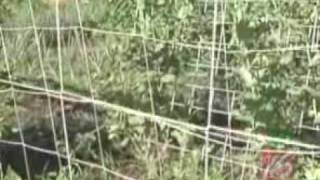 How To Build A Trellis In Your Garden