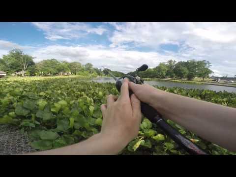 Punching The Pads{Haddon Lake],{Alcyon Lake]