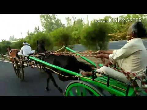 Zahid Ali Horse Race 16 Km