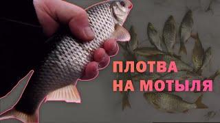 Ловля плотвы зимой на реке Зуша Зимняя рыбалка на мотыля 2021