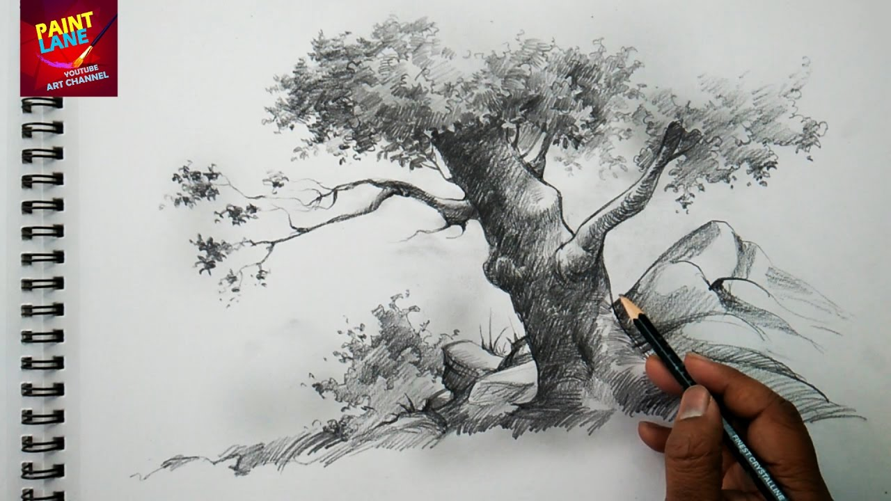 Basic Sketch And Shade A Tree With Pencil Pencil Art Youtube