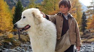 世界的ベストセラーとなったセシル・オーブリーの児童文学「アルプスの村の犬と少年」を実写化したドラマ。アルプスを舞台に、山をさまよっ...