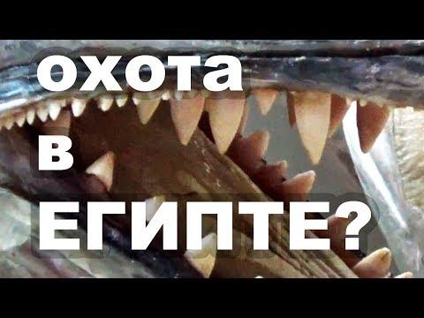 Рыбы Красного Моря. Подводная охота в Египте.
