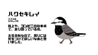 バーチャルねこと どうぶつまなぼう #01