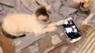 Mico guarda film sul telefono