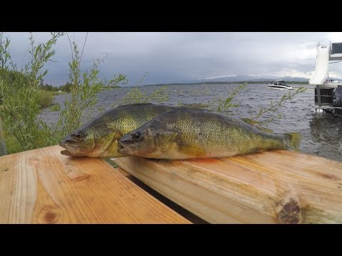 Catch N' Cook Yellow Perch In A Mountain Lake (Day 1)