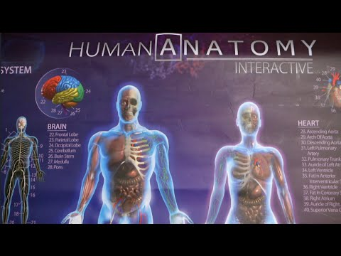 Human Anatomy Interactive Poster from Popar Toys