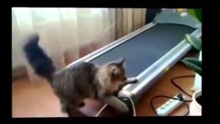 Смешные кошки, маленькие пушистики