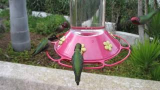 2 hours long! Hummingbirds at 3 Bird Feeders! (in HD)