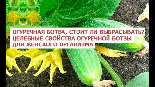 Огуречная ботва, стоит ли выбрасывать  Целебные свойства огуречной ботвы для женского организма  13