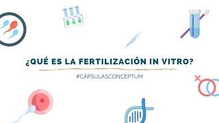 ¿Qué es la Fertilización In Vitro? | Cápsulas Conceptum