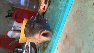 живая голова рыбы