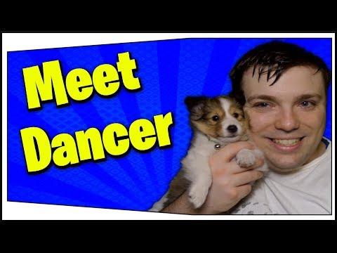 Introducing My Puppy Dancer! - MumblesVideos Special Announcement ( Shetland SheepDog )