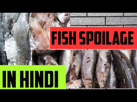 SPOILAGE OF FISH (IN HINDI)