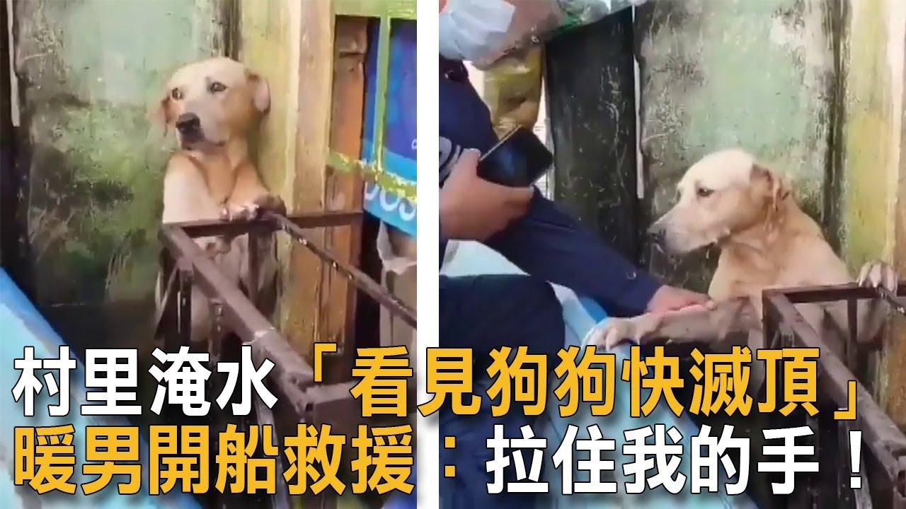 村里淹水「看見狗狗快滅頂」 暖男開船救援:拉住我的手! 狗狗故事 淹水