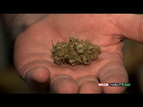 WCCB Special Report: Local Man Risks His Freedom In Fight For Medical Marijuana