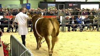 Arwerthiant y gwartheg - rhan 2   Cattle auction - part 2