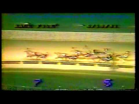 1981 George Morton Levy Memorial - Roosevelt Raceway - Newt Lobell