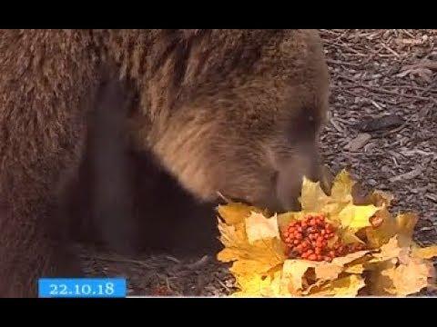 ТРК ВіККА: У черкаському зоопарку яскраво відсвяткували День гарбуза