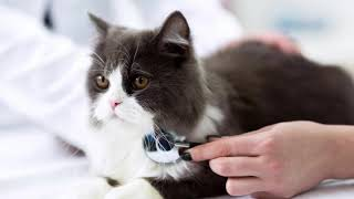 5 Facts That Make Cats Tremor