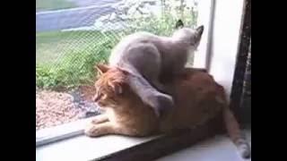 Котенок сел на  кота)
