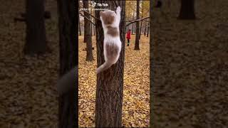 Funny Animals of Tik Tok