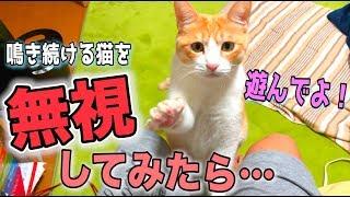 遊んで欲しくて鳴き続ける猫を全力で無視してみた! thumbnail