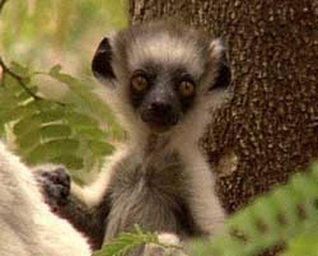 Madagascar 2. | Storyteller Media