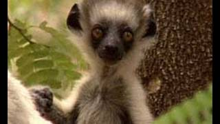 Cover images Madagascar 2. | Storyteller Media